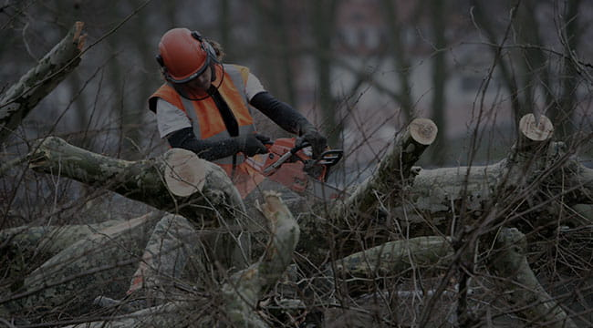 Independence Tree Service